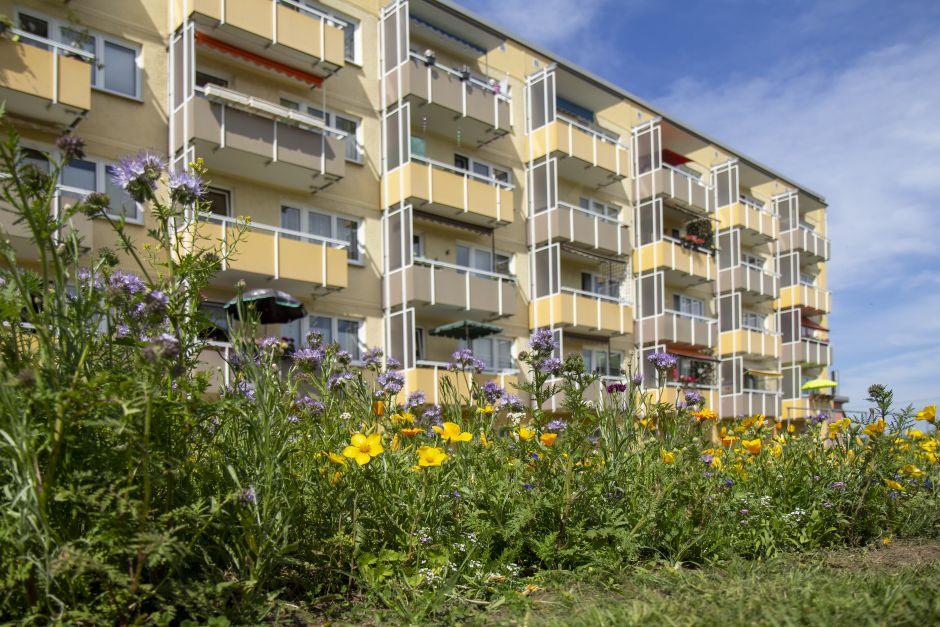 Partnersuche in ribnitz-damgarten